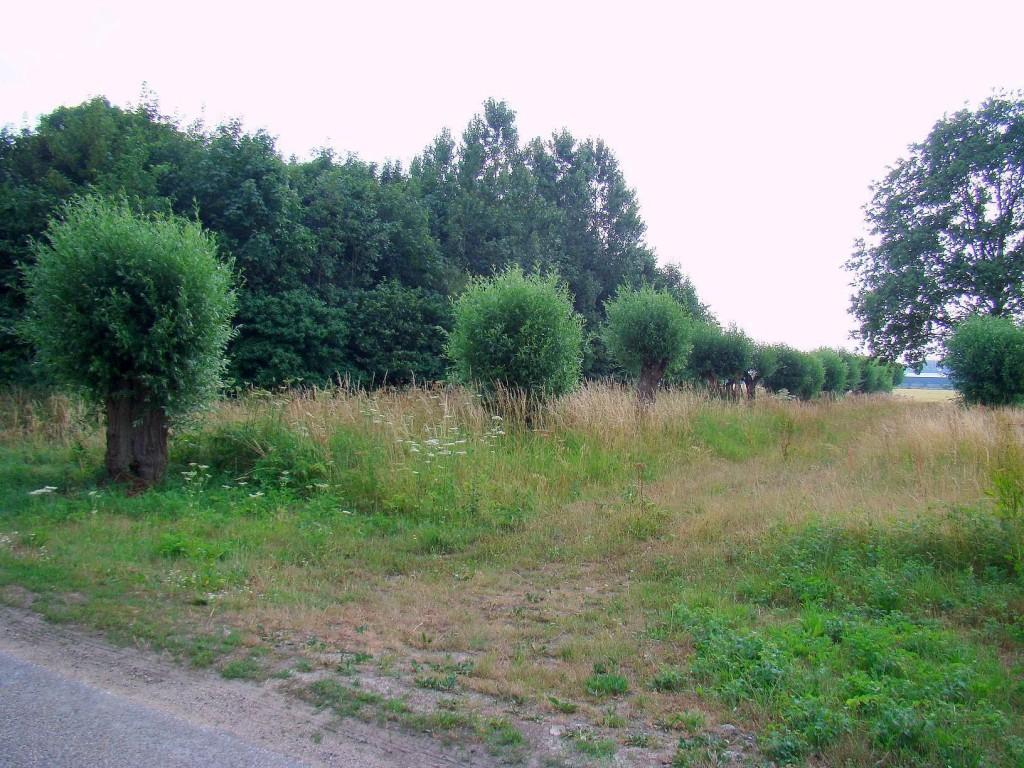 Huisseling.nl; Tijdlijn